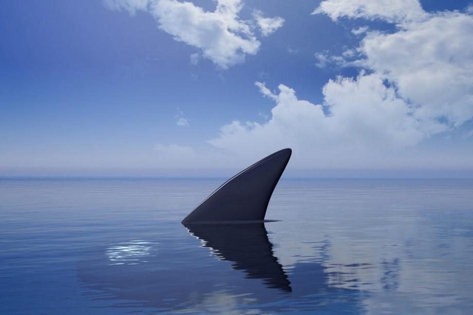 Autoritățile din Australia au închis două plaje în urma unui presupus atac al rechinilor