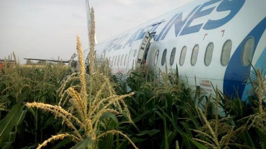 Un avion cu 234 de persoane la bord a aterizat de urgență într-un câmp de porumb. Aeronava a intrat în coliziune cu un stol de păsări