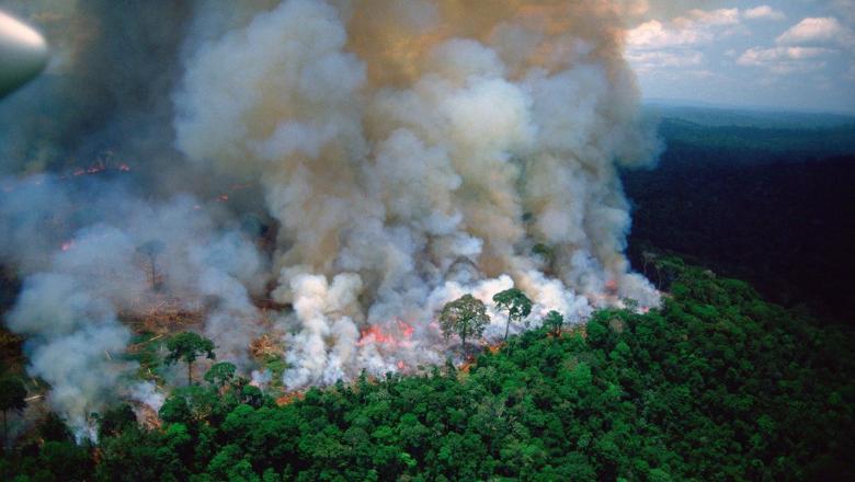 Peste nouă mii de incendii în câteva zile. Cea mai mare pădure a planetei arde într-un ritm alarmant