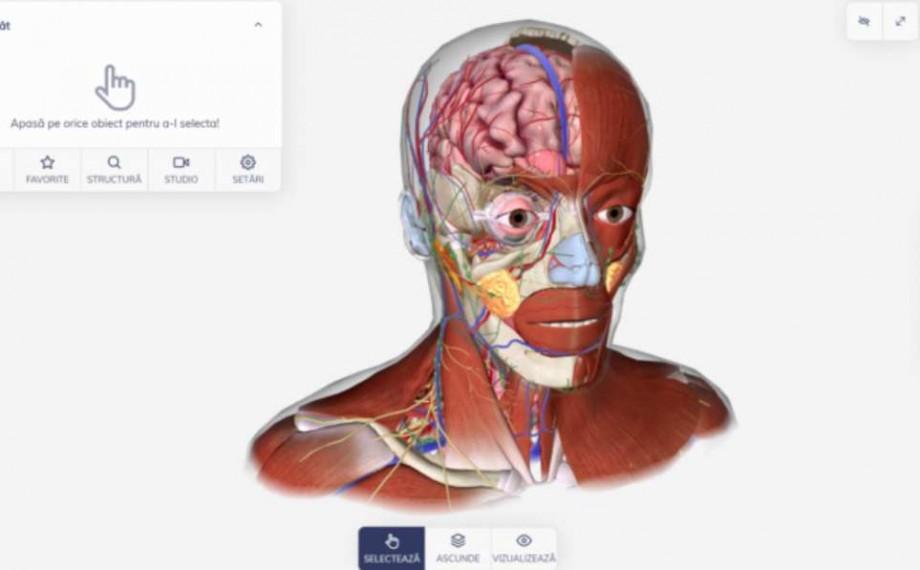 Explorează corpul uman. Biomap, aplicație online 3D destinată elevilor sau studenților de la medicină