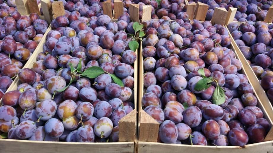 Dacă tot te plimbi azi pe la Valea Morilor, ia o torbă de acasă și o poți umple cu fructe la un târg de roadă locală