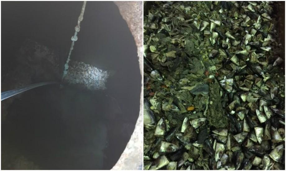 """Sursa mirosului neplăcut din Capitală: """"Trei tone de resturi de pește au fost depistate în grătarele de la Stația de Epurare"""""""