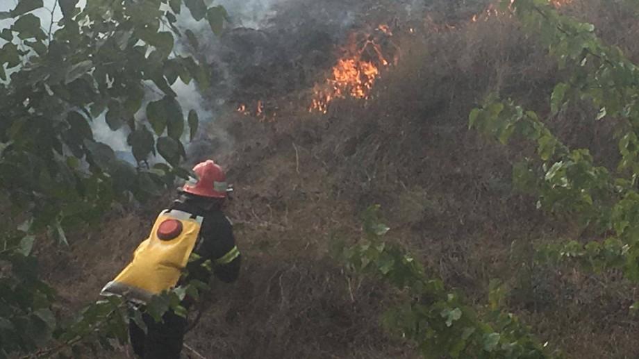 (foto) Incendiu puternic în Delta Dunării. Peste 10 hectare de vegetație uscată au fost cuprinse de flăcări