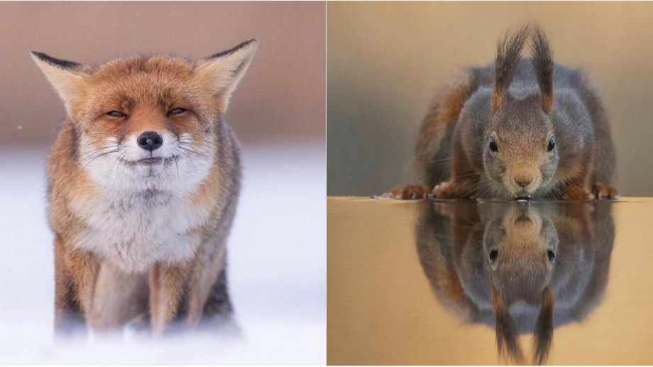 (foto) Ce fac animalele când nimeni nu le vede. Un artist olandez a surprins lumea sălbatică într-o manieră adorabilă