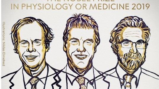Au fost anunțați câștigătorii Premiului Nobel pentru Medicină din 2019. Cine sunt aceștia