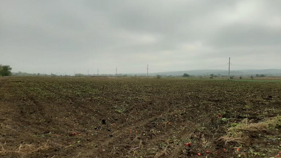Peste 10 hectare de legume din apropierea albiei râului Bâc vor fi nimicite. Inspectorii ANSA au depistat un conținut depășit de plumb