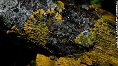 """(foto) """"Blob"""". Un nou organism misterios a fost prezentat la o grădină zoologică din Paris"""
