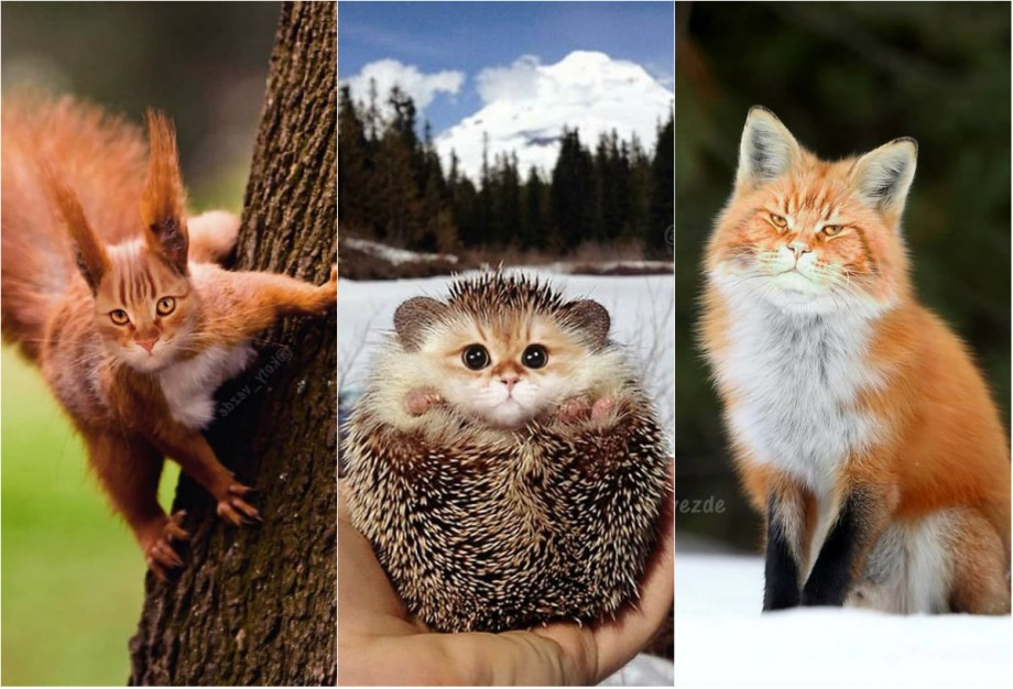 (foto) Ochi drăgălași, năsuc umed și mustăți lungi. Cum ar arăta animalele dacă ar avea față de pisică