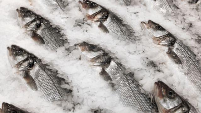 Peste 73 de loturi cu pește au fost depistate infectate cu paraziți. Ce măsuri vor fi luate