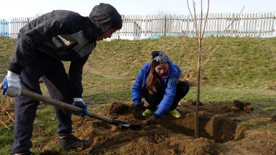 Mai mulți arbori vor fi plantați în parcurile Dendrariu și Valea Trandafirilor din capitală