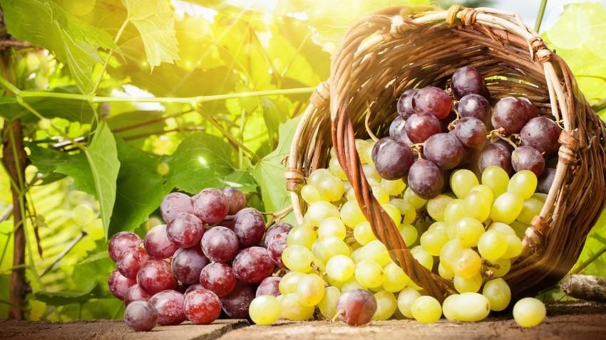 Federația Rusă a interzis importul a 39 de tone de prune și struguri moldovenești