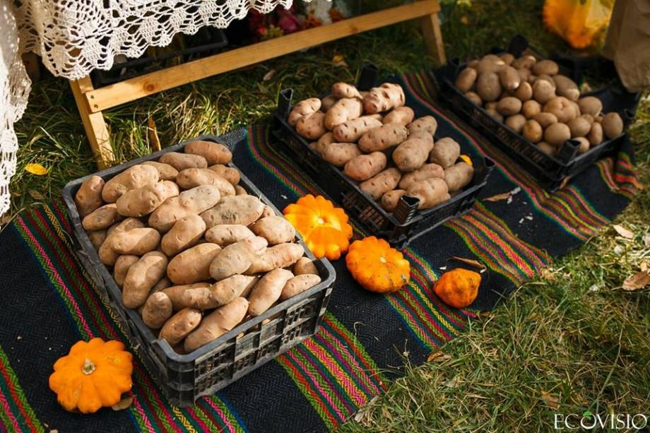 Dacă vrei să guști cartofi pregătiți în fel și chip, atunci participă la Toamna cartofilor