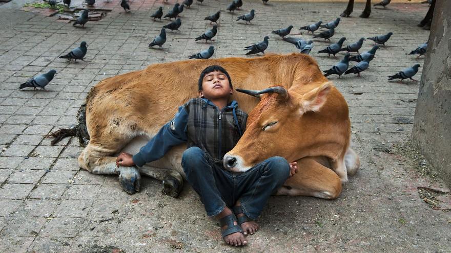 (foto) Un fotograf american îți arată relația strânsă dintre animale și oameni într-o serie de imagini emoționante
