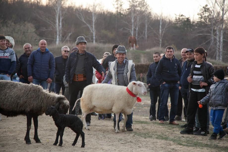 """(foto) Au venit oaspeți din 10 țări. Cum s-a desfășurat Iarmarocul """"Mioriță Laie-Bucălaie"""", organizat la Cimișlia"""