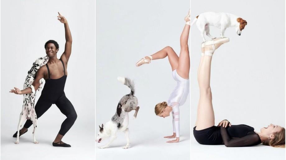 (foto) 100 de dansatori, 100 de câini, 100 de fotografii și emoții. Cum prietenii pufoși completează mișcările din balet