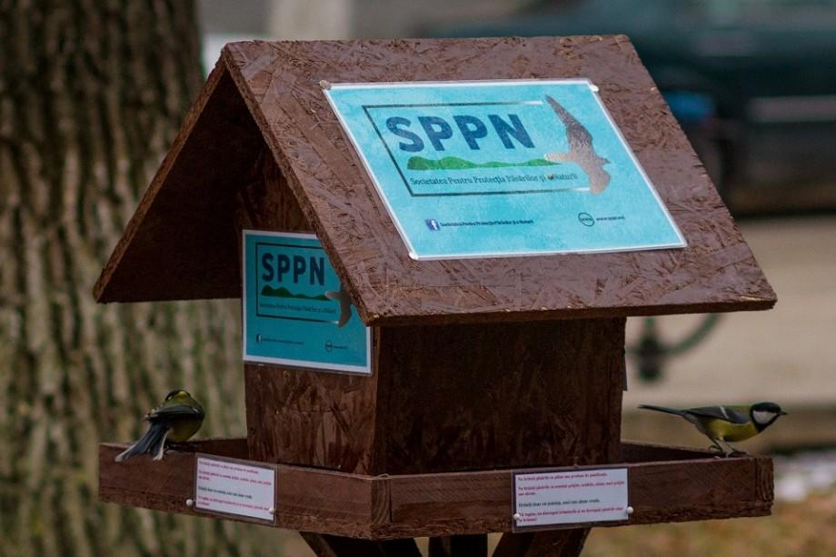 Societatea Pentru Protecția Păsărilor și a Naturii te provoacă să fotografiezi păsări la hrănitoare și să câștigi premii