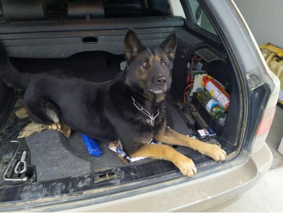 (foto) Câinele Maia a deconspirat intenția unui ucrainean de a transporta ilegal peste 2 000 de țigări din Moldova în România