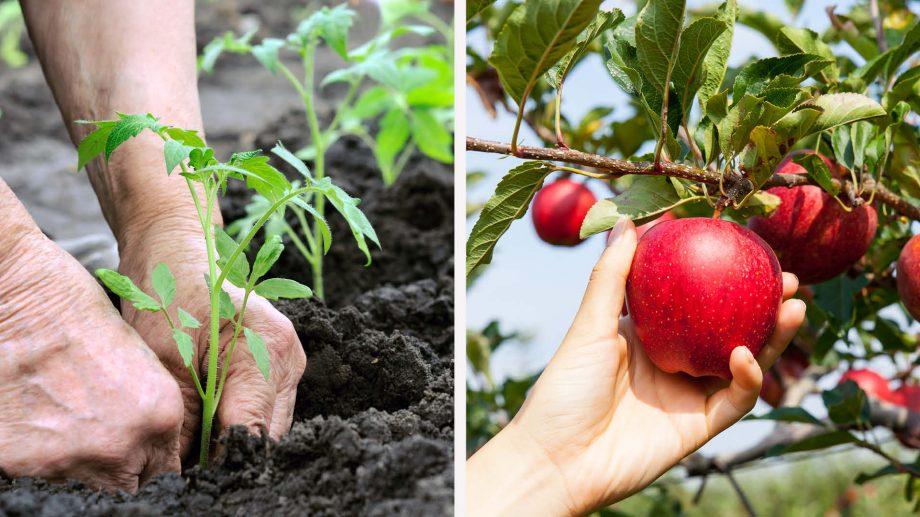 """Moldova Agroindbank relansează Campania dedicată producătorilor agricoli """"Primăvara 2020"""""""