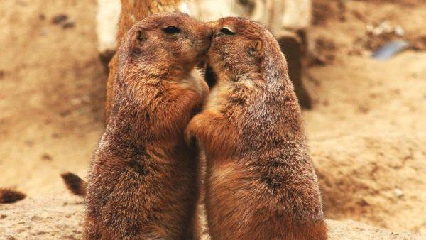 Grădina Zoologică din Capitală s-a îmbogățit cu 11 animale. Când poți vedea noii locatari