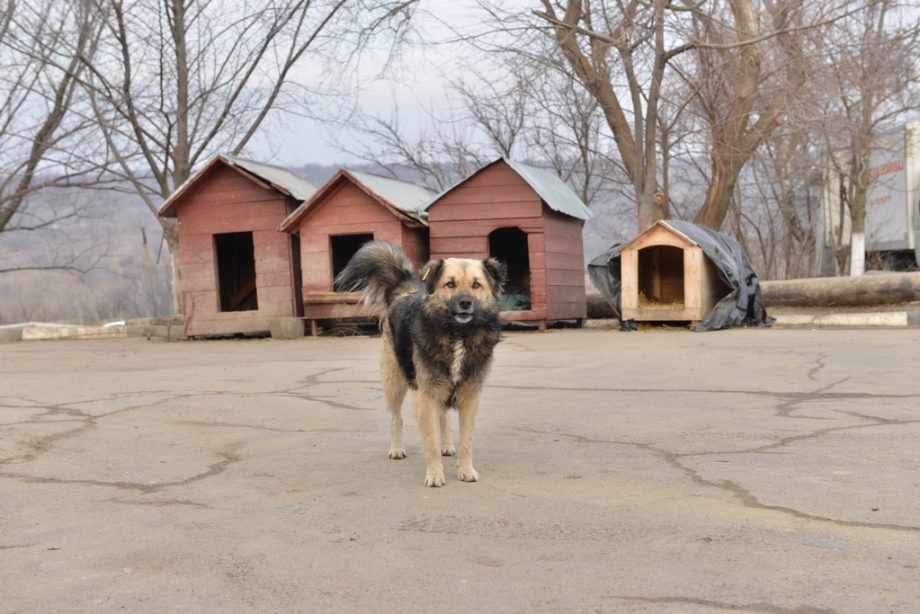 Centrul de găzduire a animalelor fără stăpân din Chișinău va fi extins. Acesta va oferi condiții mai bune pentru patrupezi