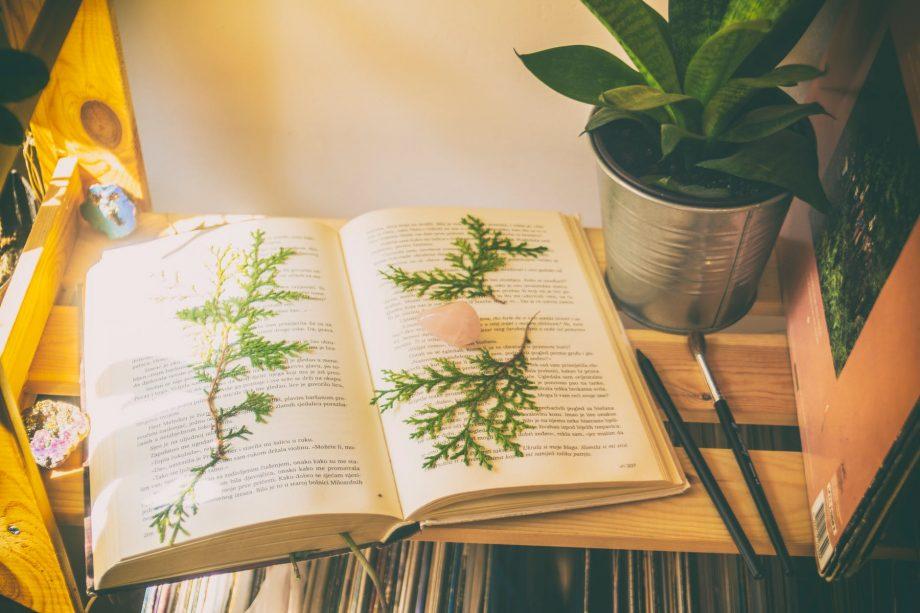 Recomandări din liceu. Săptămână nouă – trei cărți noi care te așteaptă să le citești