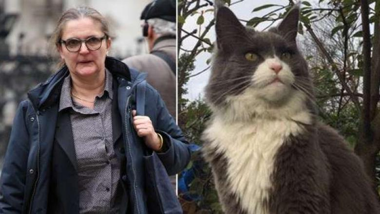 Pisica e de vină. Două familii din Marea Britanie s-au judecat câțiva ani din cauza unei feline