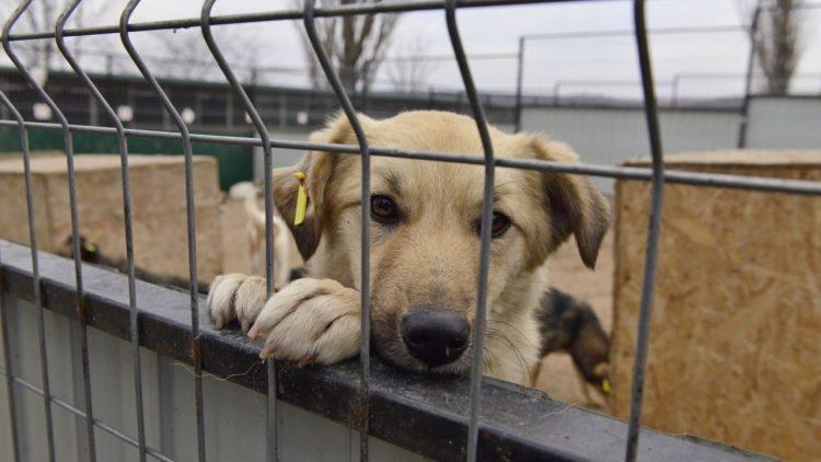 (foto) Mai multe voliere pentru maidanezii din Capitală. Cum arată noul complex amenajat pentru 400 de câini