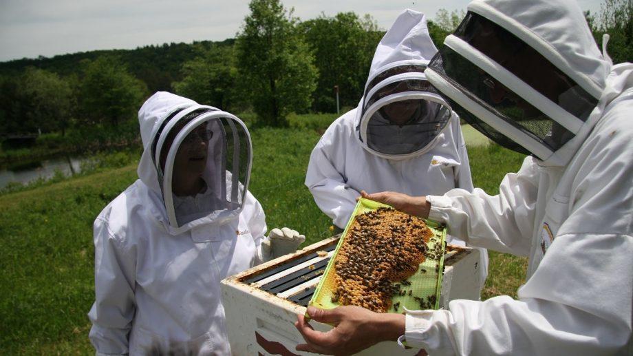 Coronavirusul a afectat cel mai mare producător de miere din lume. Apicultorii chinezi sunt nevoiți să stea în casă