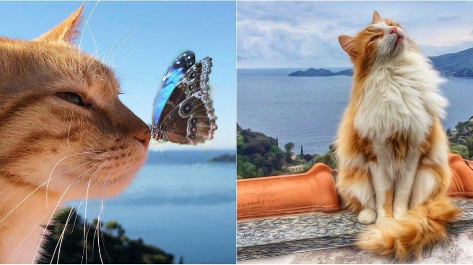 199+ nume românești de pisici femele, pe care să le alegi pentru comoara ta pufoasă