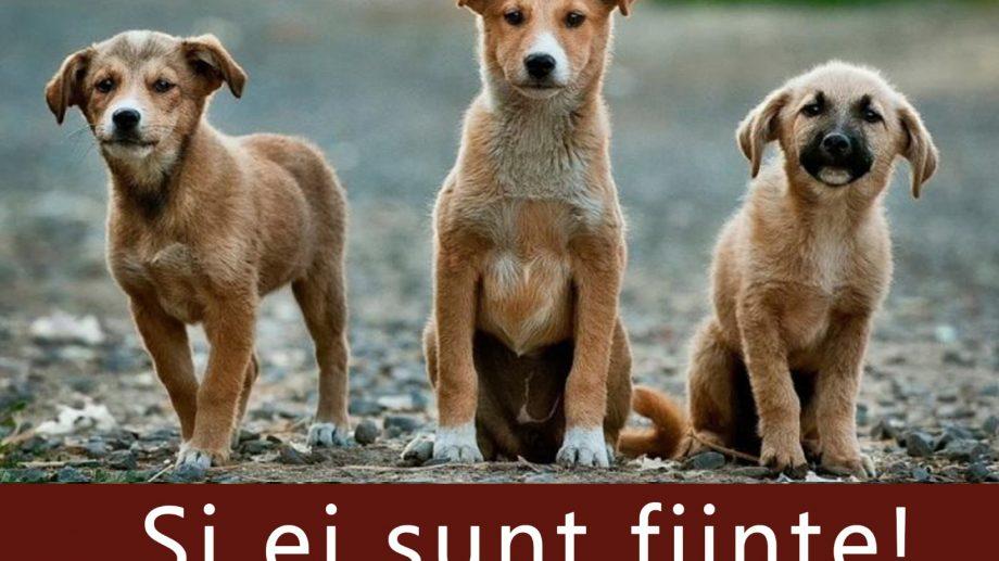 (doc) Liviu Vovc, despre problema câinilor maidanezi din capitală. Ce se întâmplă la CEST Necropola Chișinău