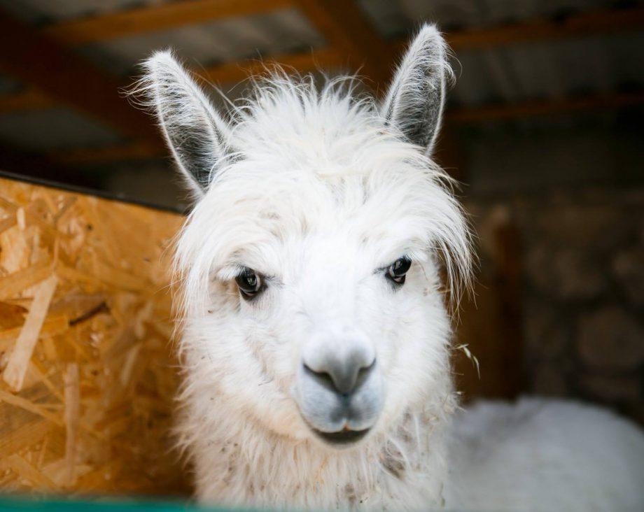 (foto) Grădina zoologică din satul Bardar și-a deschis ușile. Ce reguli trebuie să respecte vizitatorii
