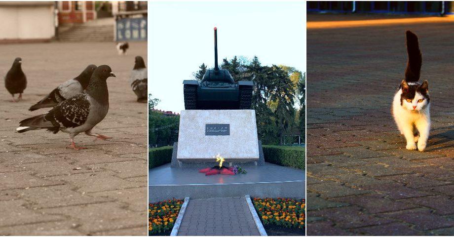 (galerie foto) O brigadă de hulubi, tancul și pisica Cika. Fă o excursie prin Bălți alături de reporterul #diez
