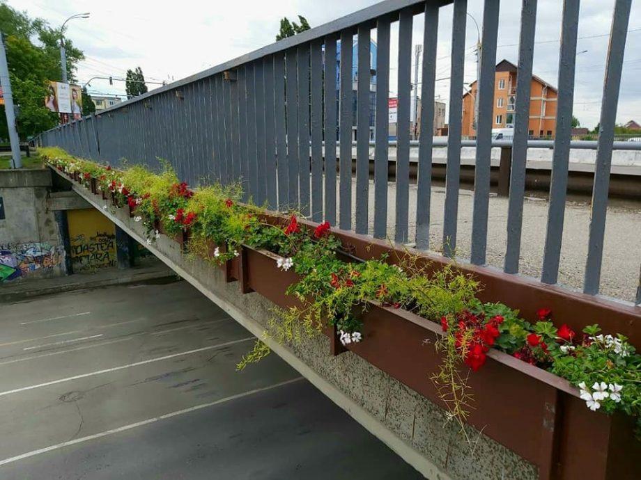 """(foto) Podul de la Telecentru a """"înflorit"""". Autoritățile publice au instalat ghivece cu flori"""