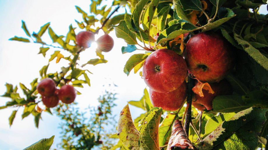 Moldova se află în topul țărilor cu cel mai mic preț pentru un kilogram de mere. Cât costă aceste fructe în alte state și unde le găsești cu 122 de lei